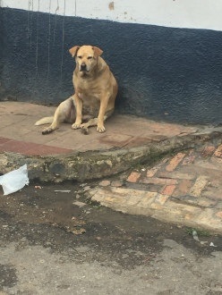 Die gleichen Straßenhunde immer noch an den gleichen Stellen