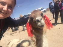 Alpaca-Selfie