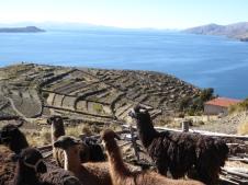 Ausblick mit Alpaca