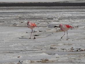 Flamingos - neue Lieblingstiere