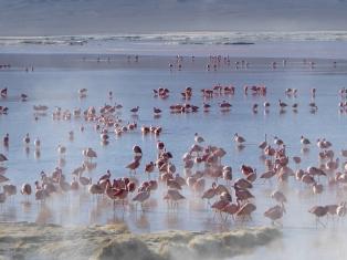 Tausende Flamingos