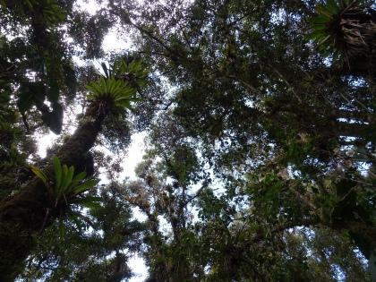 Dschungel auf der Insel